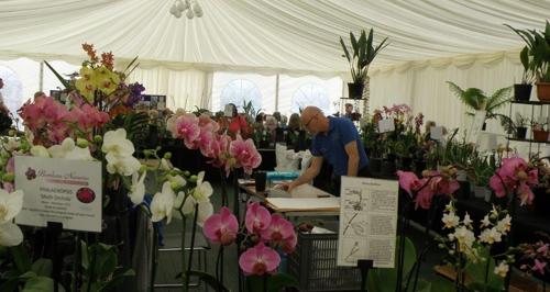 Dyffryn orchid day